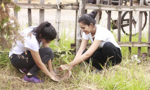 Tree Plantation 7